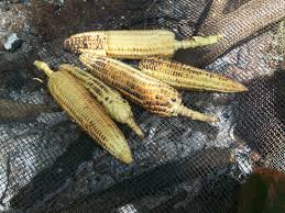 Photo: http://sarasglobalcooking.blogspot.com/2010/06/homemade-roasted-maize.html